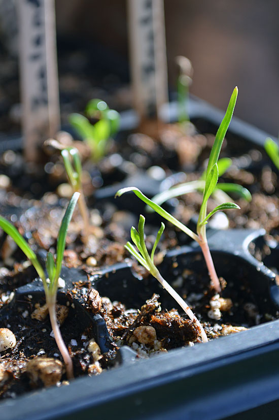 How to Care For Your Seedlings: Four Important Elements For Healthy Growth
