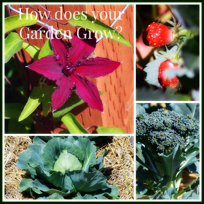 How Does Your Garden Grow: Pure Grace Farms