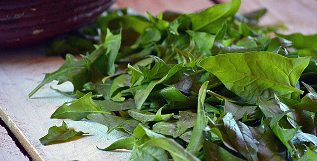Preserve the Harvest Series: How to Freeze Spinach