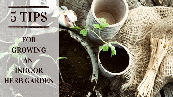 5 Tips for Growing an Indoor Herb Garden