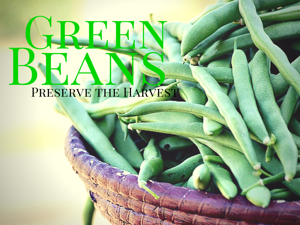 Preserve the Harvest: How To Freeze Green Beans