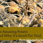 The Amazing Potato {and Why it's Good For You}